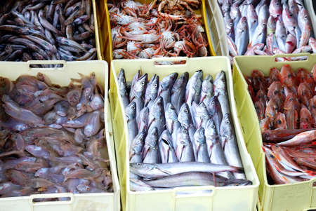 fresh fish at he market photo