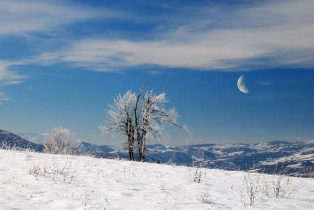 isolated tree in the icy meadow under moon light photo
