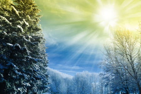cool sun beam over the park Stock Photo - 10431763