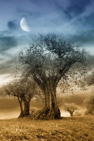 paisaje mediterraneo: �rbol secular de oliva en la noche con la luna en el cielo