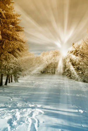 christmas morning: amazing sun beam in the forest with snow