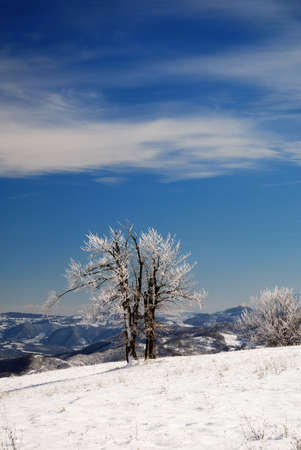 isolated icy tree in the frozen meadow photo