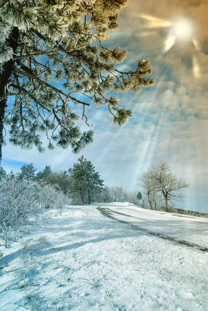 """oblodzonych drzew i wiÄ…zki sÅ'oÅ""""ce w snowy wsi Zdjęcie Seryjne - 10757956"""