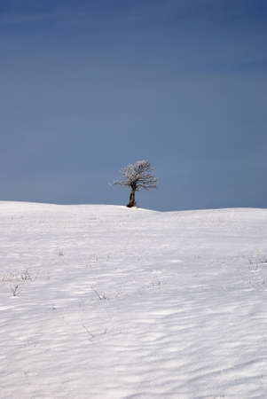 isolated tree in countryside with snow photo