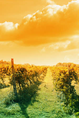 amazing sky over vineyard in tuscany Stock Photo - 11311088
