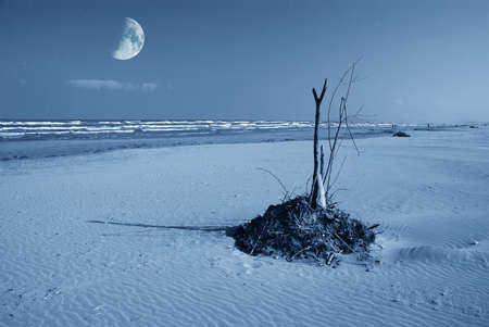 debris on the beach with moon light photo