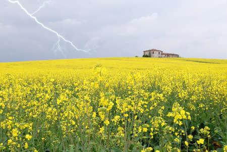 rapeseed field under cloudy sky with lightning Stock Photo - 12910826