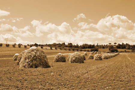natural seed drying in countryside in italy photo