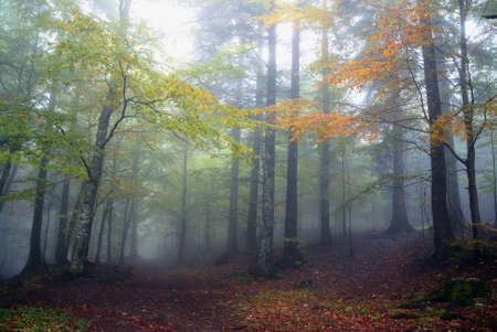 forest in autumn with fog Stock Photo - 15737474