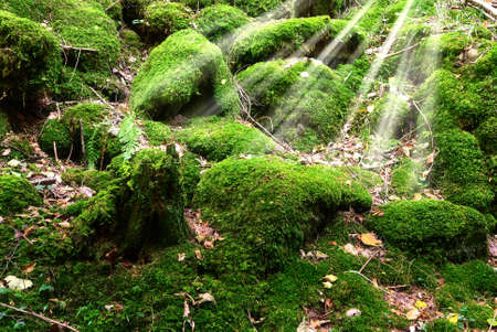undergrowth: undergrowth of the park covered with moss