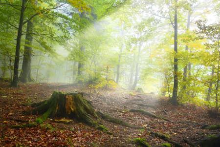 undergrowth of the forest lit by the sun Stock Photo - 16682575