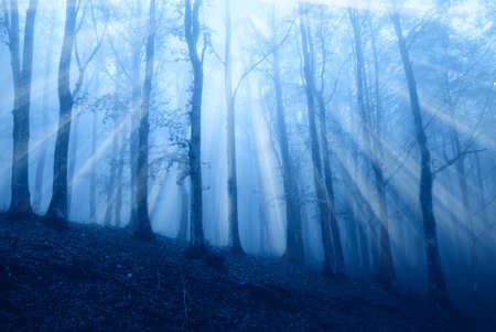 fog in the forest in winter Stock Photo - 17125384