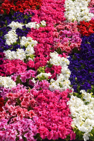 flowers in the garden in spring Stock Photo - 18546377