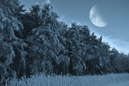 moon in the sky over the snowy forest photo