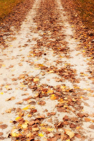 country road covered by orange leaves photo