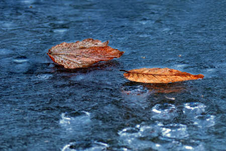 brown leaves on the ice in autumn photo