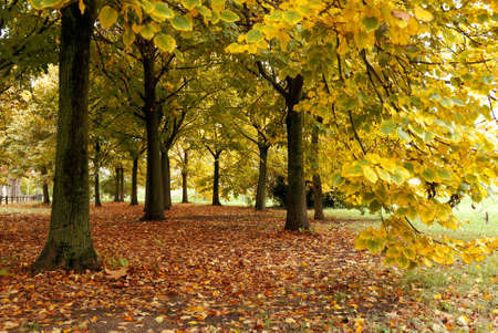 autumn scene: carpet of leaves under  the trees in autumn Stock Photo