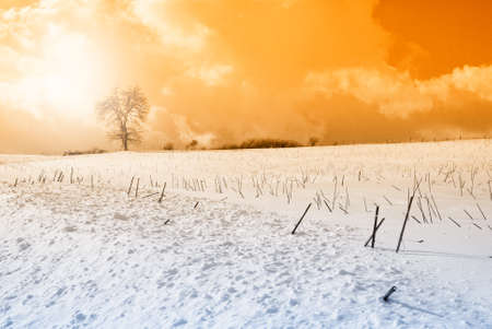 oak in snow covered field at sunset photo