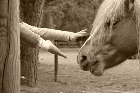 caresses: hand that caresses the horse in the park