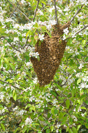 swarm of bees over the tree in countryside photo