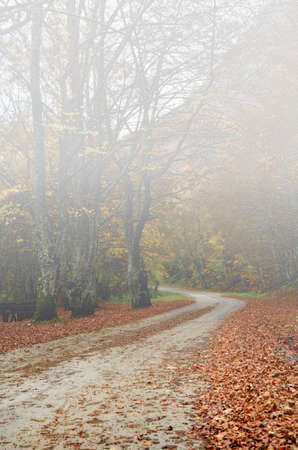 road in the park with fog in autumn photo