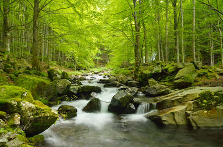 serene landscape: soft water of the stream in the natural park