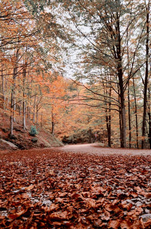 road in the park with dry leaves photo