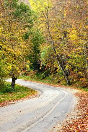 road in the park in november photo