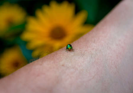 scarabaeidae: Beautiful green beetle on a human hand Stock Photo