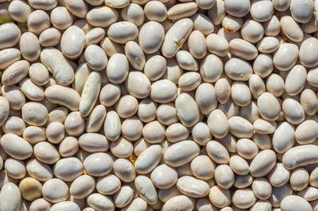 garden bean: Dry bean seeds ready for planting in the garden texture Stock Photo