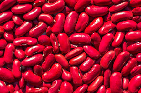 garden bean: dry red  bean seeds ready for planting in the garden texture Stock Photo