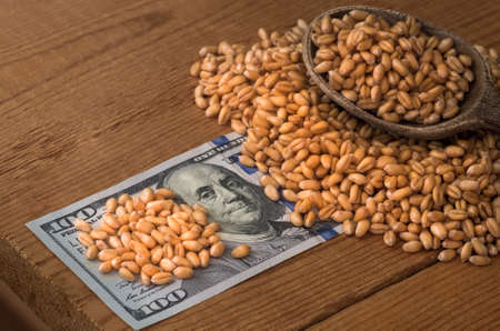 cash crop: Golden ripe organic wheat on dollar bills Stock Photo