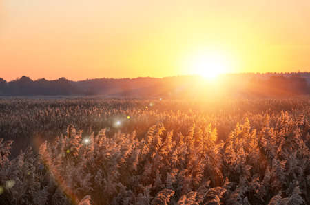 good weather: Beautiful sunrise early summer morning in good weather Stock Photo