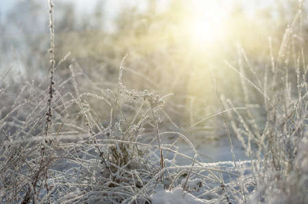 winter weather: snow and frost on a dry grass winter on a sunny morning Stock Photo