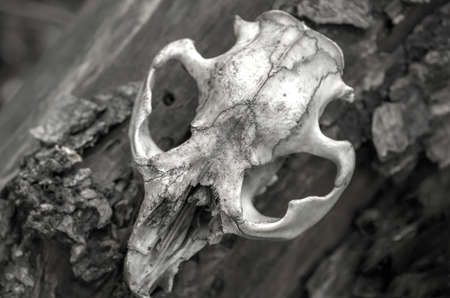 Animal Skull Photography