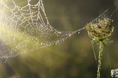cobwebs: cobwebs in the grass autumn morning at sunrise when there small fog Stock Photo