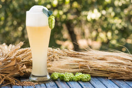 large glass beer, kvass, malt, hops barley ears natural background