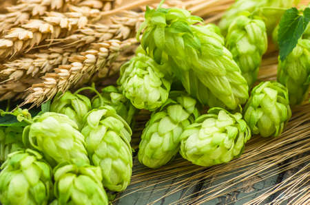 Green hops, malt, ears of barley and wheat, ingredients to make beer and bread, agricultural background Stock Photo