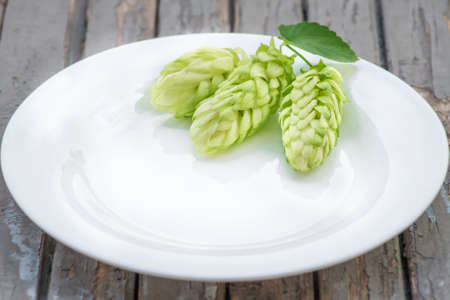 Green hop cones lying on a white dish to make beer and bread closeup , agricultural background
