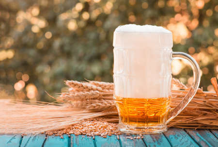 Light foamy beer in a glass and barley ears on natural background. Alcohol