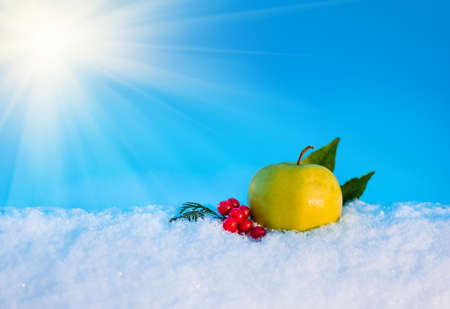frosty morning: yellow delicious Christmas apple, berries of viburnum and leaves in snow with before Christmas in sunny winter afternoon against the blue sky