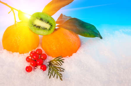 winter sunrise: Christmas fruit in snow - orange, red berries viburnum, kiwi, green leaf in snow before Christmas in sunny winter afternoon against the blue sky