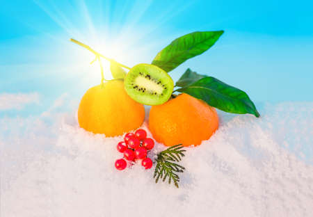 Christmas fruit in snow - orange, red berries viburnum, kiwi, green leaf in snow before Christmas in sunny winter afternoon against the blue sky