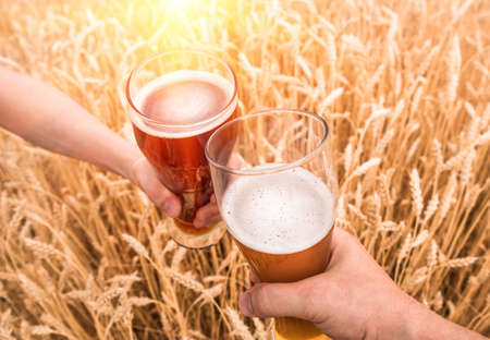 A glass of beer in the hands against ears of ripe wheat and wheat field Stock Photo