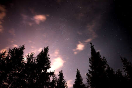 Night sky with stars fnd clouds in the spruce forest , when the morning comes. Natural background Stock Photo