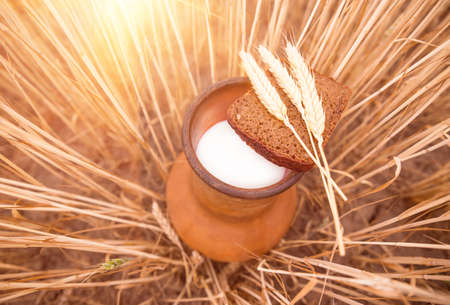 clay old vessel with milk and bread standing on the ground in a field of wheat Stock Photo