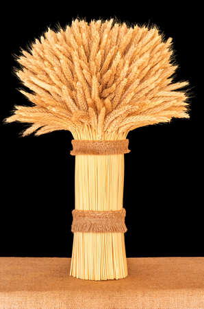 Sheaf of ripe wheat standing on a table close-up on a dark background Stock Photo