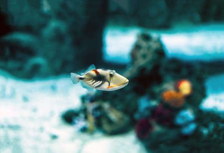 Exotic tropical fish, or common fish in aquarium
