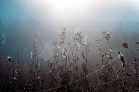 cobwebs on dry grass at foggy autumn morning