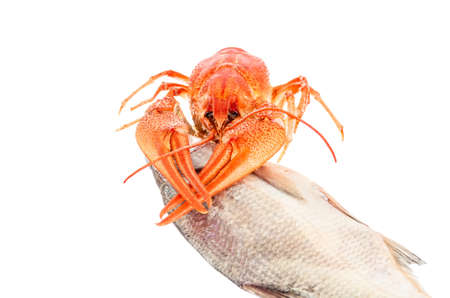 crawfish with dried fish isolated on white background. Beer brewery concept. Beer background